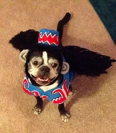 Cute Pet Costume Ideas & Cute Pet Costume Ideas | Experience Our City